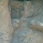 sonoran_desert_17